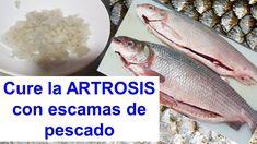Cura la Artrosis, artritis y reumatismo con escamas de pescado Fish Scales, Carne, Meat, Tips, Youtube, Sun, Medicine, Crochet Hair Accessories, Hair Straightening