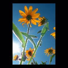 flowers – by © peter gartmann + sabina roth – art photography – art book – www.petergartmann.com – www.sabinaroth.com – switzerland – collection www.susanneminder.ch #petergartmann #susanneminder #sabinaroth #guggenheim #centrepompidou #tatemodern #tate #moma #mumok #museumludwig #whitneymuseum #sfmoma #museumofmodernart #stedelijkmuseum #massmoca #palazzograssi #artbasel #artbaselmiami #fondationbeyeler #kunsthauszürich #foto_museum #zeitgenössischekunst #contemporaryartwork #photoartwork Moma, Museum Ludwig, Art Basel, Centre Pompidou, Switzerland, Art Photography, Flowers, Plants, Collection