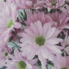Quand il arrive avec un bouquet de mes fleurs favorites  #love #flower #marguerite #pink #simplicity by karenhamelin