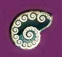 Nautilus Shell Is A Symbol For The Inner Beauty Of Nature Life And Internal Harmony Chambers Are Symbolic O