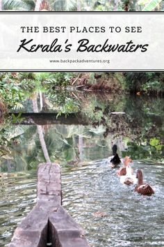 A guide to the backwaters of Kerala and where is the best place to visit them including information on Munroe's Island, Allepey and Cochin.
