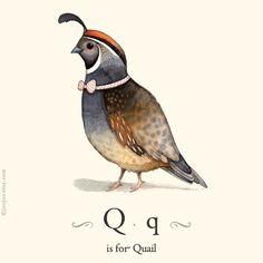 Q is for Quail, 8x10 alphabet prints, Kids wall art, Nursery art, Watercolor painting, illustration print, Children wall art