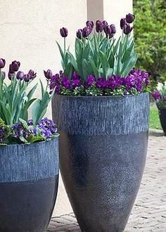 Spring mix of flowers in tall blue containers. Repinned by www.claudiadeyongdesigns.com www.thegardenspot.co.uk