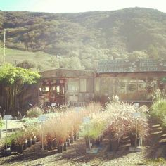 Half Moon Bay Nursery