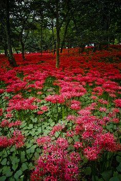 Beautiful Floral Landscape