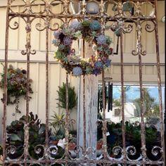 Rustic gate, succulent wreath. Amazing backyard piece.