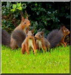 BIG FAMILY   SQUIRREL  #Fotograf: Backes