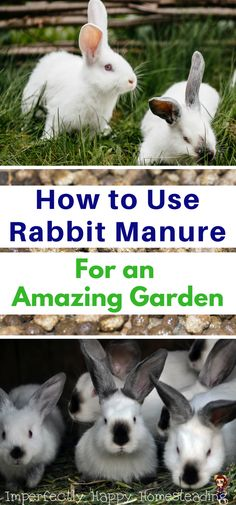 How to Use Rabbit Manure For an Amazing Garden.