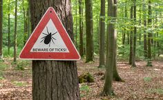 Lyme Disease isn't the Only Tick-Borne Illness to Think About