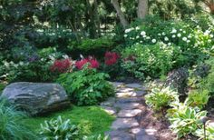 Lovely shade garden with feathery plumes of astilbe, hosta, ferns and viburnum.  Astilbe is a great shade plant.  Plant different varieties with different bloom times to extend color.