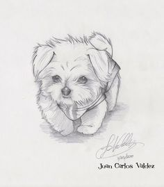 Easy animals to sketch puppy sketches drawing dog illustration animal drawings easy cute learn how to . easy animals to sketch Easy Animal Drawings, Cool Art Drawings, Animal Sketches, Pencil Art Drawings, Beautiful Drawings, Art Drawings Sketches, Easy Drawings, Art Sketches, Drawing Animals