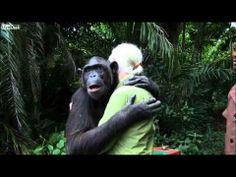 A emocionante libertação da chimpanzé Wounda