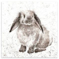 Bunny by Hannah Dale, Wrendale Designs: Watercolor Animals, Watercolor Paintings, Watercolors, Animal Drawings, Art Drawings, Drawing Animals, Wrendale Designs, Rabbit Art, Bunny Rabbit