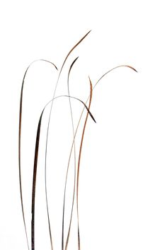 cattail leaves (mary jo hoffman)