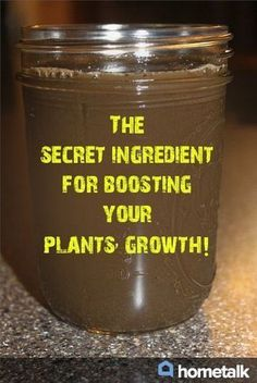 "The secret ingredient for naturally boosting your plants' growth! Compost tea or ""black liquid gold"" is the all organic ""miracle-growing"" solution to fertilizing the garden - minus the chemicals and high salt content that commercial fertilizers add to your soil. #organicgardening"