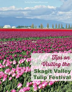 The Skagit Valley Tulip Festival in Mt Vernon is a beautiful place to visit in the spring. Here are tips on visiting & places to visit while you're there.