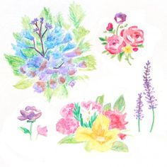 A step by step beginner guide to painting flowers with watercolor pencils.
