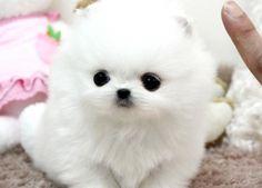 baby Capri soooo cute! but 4500.00...... I don't think so!
