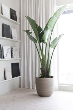 Plants 45 Best Inspiring Houseplants Decoration Ideas - Floor Plants - Ideas of Floor Plants - Plants Interior plants Indoor plants Indoor design House plants Green plants 45 Best Inspiring Houseplants Decoration Ideas Plantas Indoor, Decoration Plante, Interior Minimalista, Large Planters, Large Indoor Plants, Indoor Plant Decor, Indoor Palms, Indoor Planters, Indoor Floor Plants