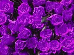 """Angel Marie will delight any event with her energized speaking. """"Your time with Angel Marie will bring you joy, happiness, and change your life. Types Of Purple Flowers, Dark Purple Roses, Purple Love, Rose Flowers, Purple Rain, Gothic Flowers, Bright Purple, Flowers Nature, Flowers Garden"""