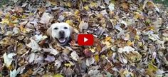 10 Adorable Dogs That Are Absolutely Obsessed with Fall Leaves