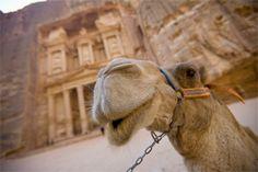 Camel at Petra, Jordan
