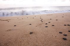 Celebrating the Turtle Season in Baja California Sur Gray Whale, Baby Turtles, Dance Choreography, Us Beaches, Cabo San Lucas, Baja California, Seasons, Adventure, Luxury Villa