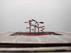 Cutting Paper Into Trees: The Art of Yuken Teruya
