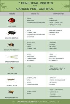 Beneficial Insects for Garden Pest Control | How To Eliminate Pests Naturally With Beneficial Insects | Infographic | Survival Life : http://survivallife.com/insects-for-garden-pest-control/