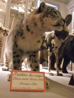 musée d'histoire naturelle la rochelle