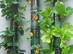 horta... na varanda
