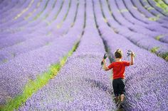 Image: A young visitor picks lavender at Cadwell Farm in Hitchin, England, on July 26 (© Simon Jacobs/London News Pictures/Zuma Press)