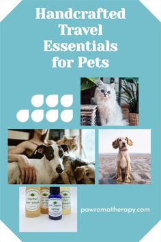 Four of my essential natural products for pets. Products are handcrafted by holistic veterinarian Dr. Deneen Fasano using organic ingredients such as aloe vera, herbs and essential oils. Products are safe for both cats and dogs. Flea Powder For Dogs, Cat Allergies, Dog Search, Pet Shampoo, Flea Treatment, Cats For Sale, Healthy Pets, Pet Travel, Pet Beds