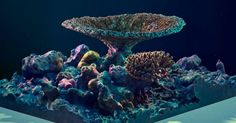 Engineers Are 3D Printing Coral Reefs to Help Save Our Oceans http://futurism.com/engineers-are-3d-printing-coral-reefs-to-help-save-our-oceans/