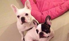 Acusado de maus-tratos a duas cadelas ( tão lindas!) deve prestar depoimento à Polícia Civil nesta terça