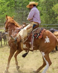 "SHOWMAN 8/' x 3//4/"" huilé Harnais en Cuir SPLIT Reins Made in the USA Horse Tack"
