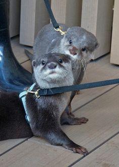 姉と弟 #サンシャイン水族館 ハク&ジーノ