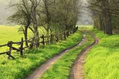 Country Road in the Spring