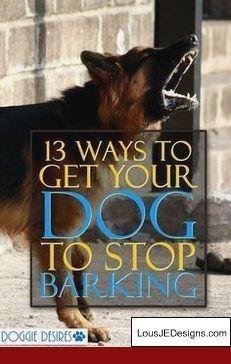 dog care,dog stuff,dog tips,dog training,dog hacks Westies, Beagle, Dog Minding, Stop Dog Barking, Easiest Dogs To Train, Dog Training Tips, Training Classes, Training Academy, Potty Training