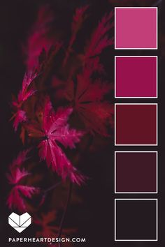Color Palette: Fall Leaves Monochromatic red burgundy pink color inspiration You are in the right place about wedding color palette coral Here we of Color Schemes Colour Palettes, Fall Color Palette, Colour Pallette, Color Palate, Color Combos, Fall Color Schemes, Monochromatic Color Scheme, Pink Palette, Design Seeds