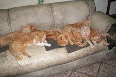 Minha gang amarela dormindo