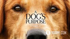 Based on the beloved best-seller novel by W. Bruce Cameron, the director Lasse Hallström (The Cider House Rules, Lieber John, The 100-Foot Journey), the emotional and surprising story of a beloved dog (voiced by Josh Gad) , Who finds the meaning of his own existence by the life of the people he ...