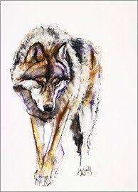 Mark Adlington - europäischer Wolf