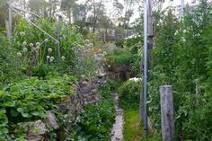 The garden at David Holmgren's property, Melliodora.