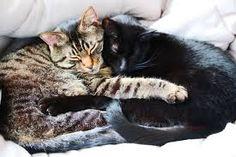 Image result for black cat love