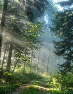 Утренний лес.
