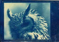An owlish cyanotype.