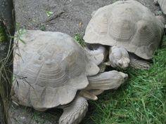Turtles no jardim zoológico Hellbrunn Turtle, Animals, Zoological Garden, Salzburg, Pictures, Turtles, Animales, Animaux, Tortoise