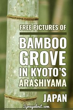 """Bamboo Grove in Arashiyama: Famous """"Forest"""" in Kyoto, Japan Taking Pictures, Free Pictures, Wonderful Places, Beautiful Places, Japan Travel Photography, Some Beautiful Pictures, Picture Sharing, Japan Trip, Famous Places"""