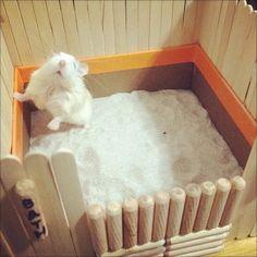 DIY-Hamster-Bath-House